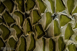 مراحل طحن وتغليف الحنة عند أقدم عطار في يزد /صور