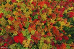تصاویر هوایی از رنگ های پاییزی