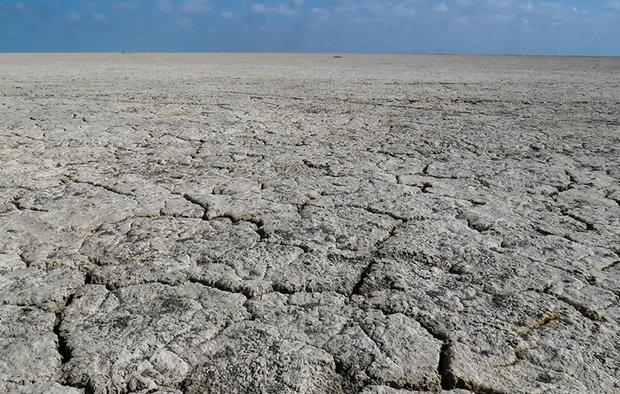 رئیس سازمان جهاد کشاورزی فارس: ۲ میلیون هکتار از مراتع فارس به دلیل خشکسالی کشت نمی شود
