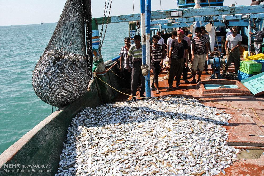 Shrimp fishing season begins in Hormozgan