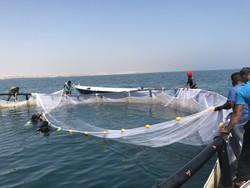 آبزی پروری در استان بوشهر گسترش مییابد/ افزایش تولید ماهی و میگو
