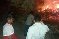 آتش سوزی گسترده در نخلستان ها و باغ های انبه جنوب کرمان