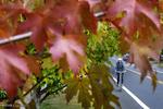 باید و نبایدهای فصل پاییز/ افراد خشک مزاج در معرض بیماری