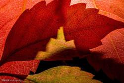 موسم خزاں کے خوبصورت رنگ