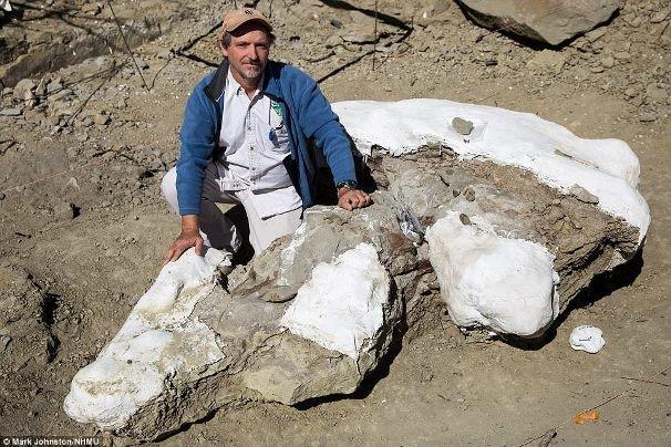 اسکلت ۷۶ میلیون ساله یک دایناسور شناسایی شد
