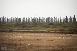 زمینهای زراعی شادگان به اراضی بایر تبدیل شدهاند