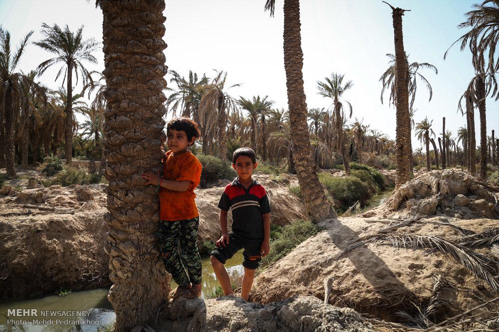 وزارت نیرو حق آبه خوزستان را کاهش داد/نابودی کشاورزی و تالابها