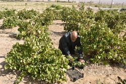 ۵۵ درصد بیکاران در روستاهای البرز ساماندهی شدند