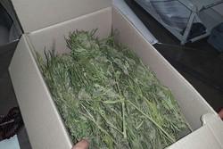 کشف یک کیلو و ۶۰۰ گرم ماده مخدر گل در خدابنده
