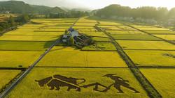 چینیها با آب شور برنج کشت میکنند/نیاز ۲۰۰میلیون نفر تامین می شود