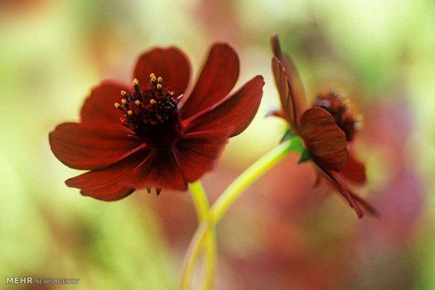 کمیاب ترین گلهای جهان