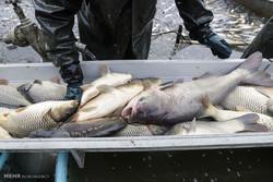 سنت سالانه ماهیگیری در جمهوری چک