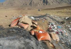 امحا ۸ تن خوراک دام آلوده به قارچ در اسلام آباد غرب