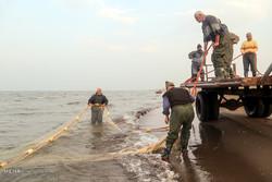 افزایش دو برابری صید ماهیان استخوانی در شهرستان رودسر