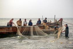 """بدء موسم صيد الأسماك العظمية في محافظة """"كيلان"""" شمالي إيران / صور"""