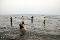 ۷۱۴ تُن انواع ماهیان استخوانی در دریای خزر صید شد