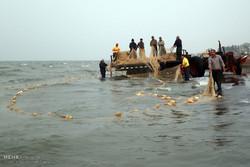 صید ماهی کاهش یافته است/ ۸۰۰ شناور مشغول صیادی در آبهای بین الملل
