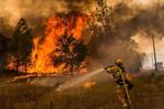 وقوع ۳۳ فقره آتش سوزی در جنگل های بام ایران/حریق ها کاهش یافت