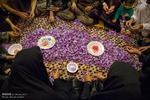 بازار گل زعفران گناباد داغ شد/خرید تضمینی«طلای سرخ»از کشاورزان