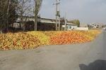۴۰ هزارتن سیب صنعتی از باغداران آذربایجان غربی خریداری شد