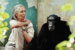 معرفی بهترین مستندهای سال به انتخاب انجمن منتقدان فیلم آمریکا