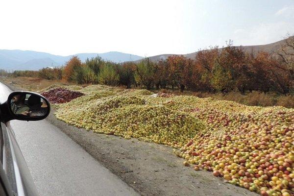 سیب امسال هم خریدار ندارد/مشکلی که هر سال تکرار می شود