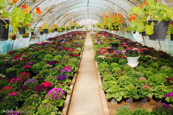 ۱۱۵ شهرک گلخانه ای در کشور احداث شده است