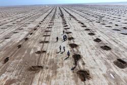 درختکاری بیابان زدایی بسیج سازندگی