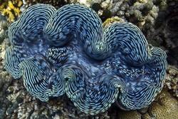 حلزون دریایی