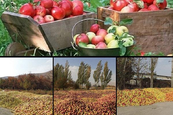 مهر ماه تلخ سیب ایران/ مشکلی که هر سال تکرار میشود