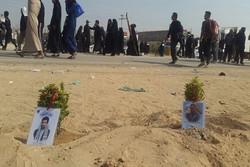 کاشت نهال در مسیر پیادهروی اربعین به یاد دو شهید فاجعه «منا»