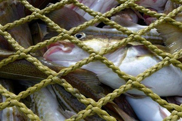 ممنوعیت صید ماهی و آبزیان در اندیمشک