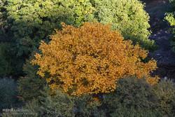 پاییز هزار رنگ در جنگل های زیبای ارسباران