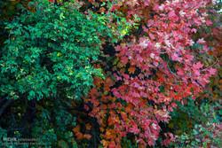"""الخريف الساحر في غابات """"ارسباران"""" /صور"""