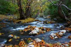 ساماندهی ۱۴۰هزار همیار طبیعت در سامانه همیاران طبیعت