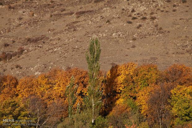 """الخريف الساحر في غابات """"ارسباران"""""""