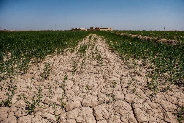 اراضی کشاورزی - کراپشده