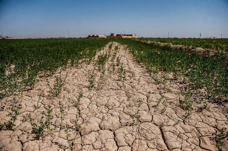 لرستان به وقت خشکسالی/ کاهش ۱۰۰ درصدی بارندگیها در اردیبهشت ماه