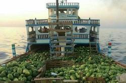 صادرات هندوانه