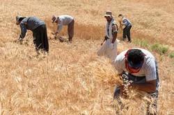 harvest festival in Zanjan