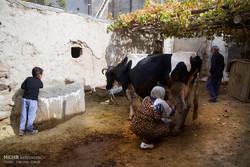 ۴۵ دوره آموزشی ویژه زنان روستایی در آذربایجان غربی برگزار شد