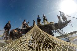 موسم الصيد في بحر قزوين شمالي ايران / صور