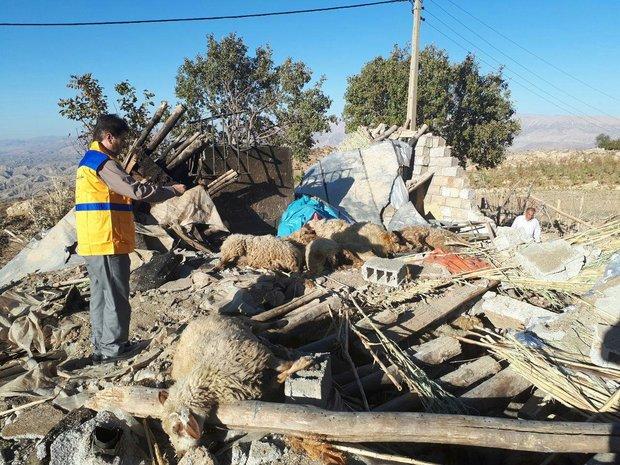 اتلاف دام ها در مناطق زلزله زده کرمانشاه