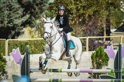 Show Jumping Premier League in Tehran
