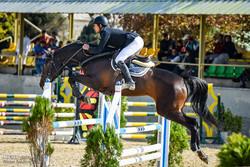 تربية الخيول العربية في يزد مهنة تزدهر من جديد