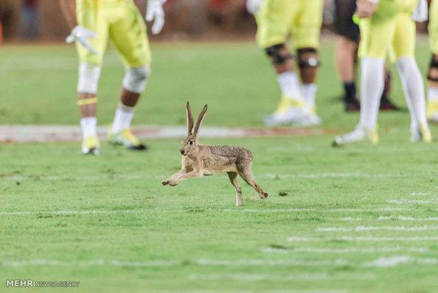 حیوانات در میادین ورزشی