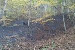 آتشسوزی جنگل کردکوی کنترل شده است