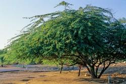 کمبود منابع آبی در استان بوشهر/ لزوم کشت گیاهان سازگار با اقلیم