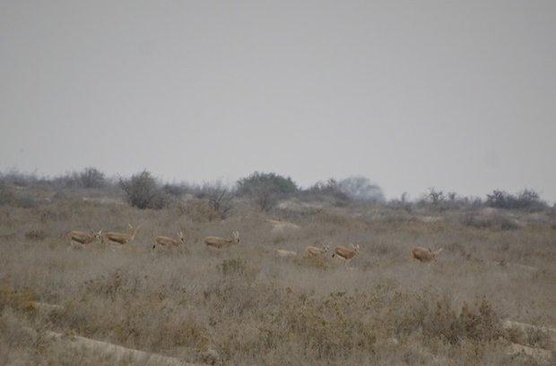 مناطق حفاظت شده استان بوشهر نیازمند توجه بیشتری است