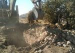 لزوم دفن بهداشتی لاشه دامهای تلف شده در زلزله استان کرمانشاه